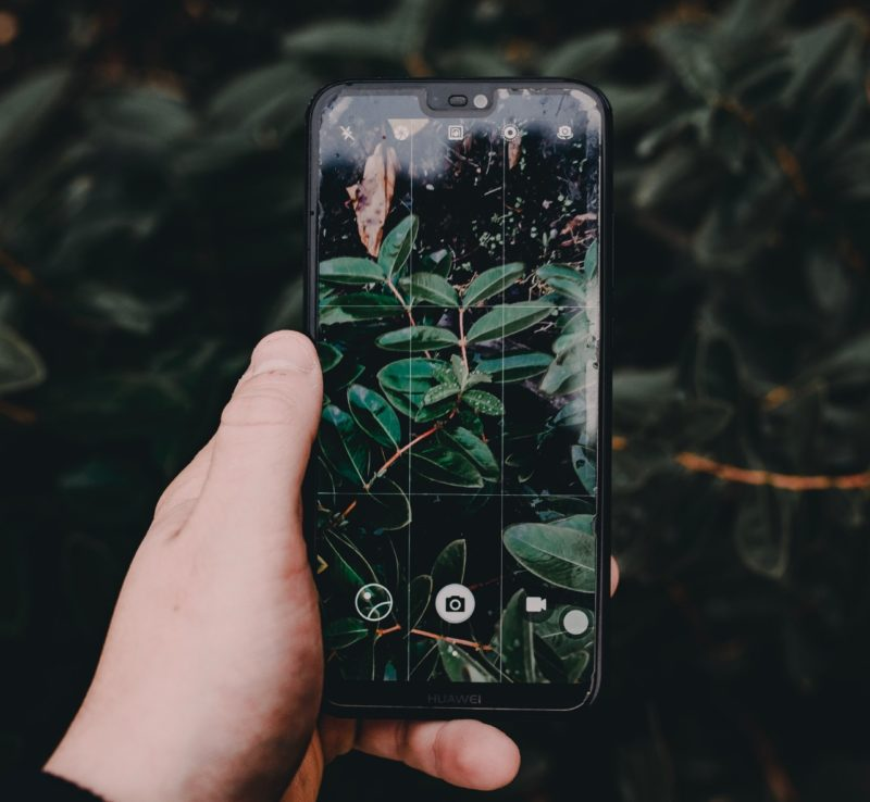Phone screen with plant