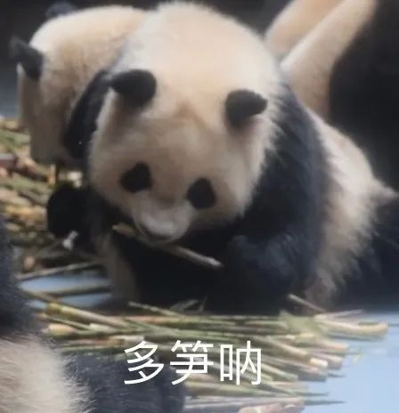 Chinese internet slang