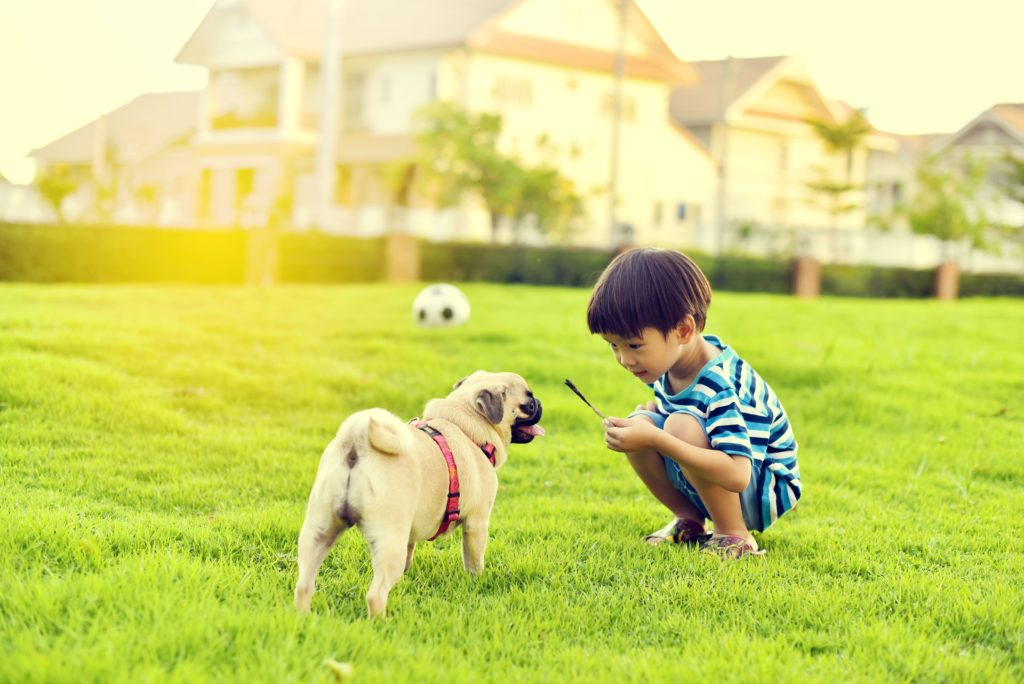 Chinese child with dog